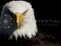 Liderazgo-Aguila